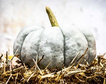 Printables Ghost Pumpkin Printable Photography Fall Autumn Pumpkin Instant Download