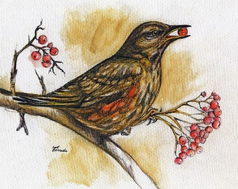 song thrush, wildlife, wild bird, original pen and watercolours painting of a thrush eating berry