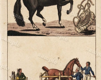 horses 1817 Antique Original Hand colored Engraving  Of Animals -  Natural history-  Tobias Wilhelm Over 200+ Years old