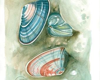 """Watercolor Print: """"Coquina I"""""""