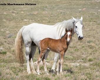 Wild Mustang Mare & Foal ~ Wild Horses ~ Wild Mustangs ~ Equine Art ~ Equine Photography ~ Home Decor