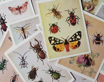 Set of 29 Vintage Insect Cards - Entomology Illustrations, Insect Prints
