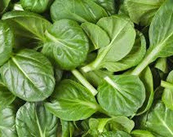 GREEN SPINACH SEEDS 25 Fresh vegetable seeds ready to plant in your garden