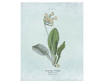 Printable Artwork: Botanical Print, Botanical Art, Flower print, Vintage Botanical, Floral Print, Botanical Wall Art, Blue Wall Art
