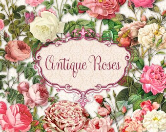 Antique Roses | Vintage Pink & White | Clipart Instant Download