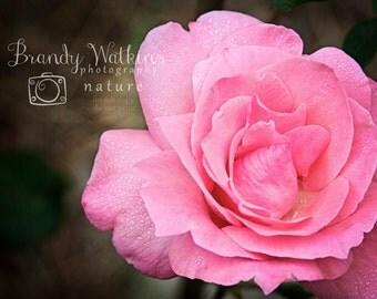 Pink Rose flower photography, flower photography, fine art, raindrop photography, baby girl nursery decor, decoration, shabby wall decor