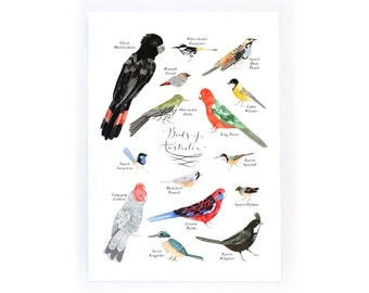 Some Birds of Australia - archival art print