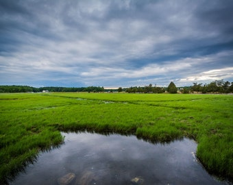 Marsh at Odiorne Point State Park, in Rye, New Hampshire.   Photo Print, Stretched Canvas, or Metal Print.