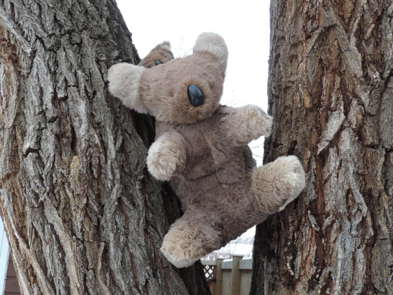 Vintage Koala BearVintage Fur Koala BearKoala Bear With