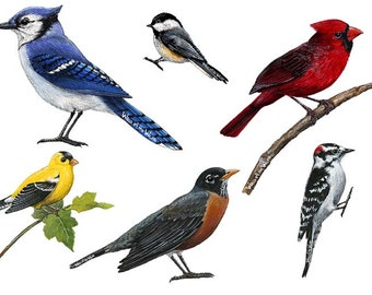 Song Birds Combo Pack Wall Decals