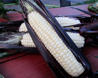 Martian Jewels sweet corn CERTIFIED ORGANIC 1 packet (75 seeds)