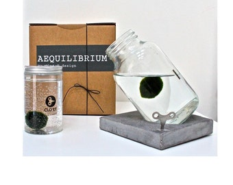 AEQUILIBRIUM by Clo eT design (500 ml) + 10 years-base MARIMO on cement