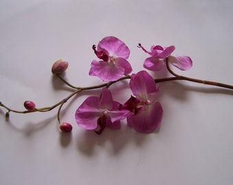 Purple Phalaenopsis Floral Stems