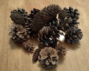 Assortment of Natural Pinecones variety of types and sizes