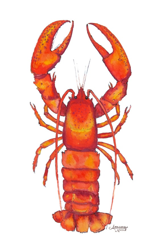 Lobster Print Lobster Watercolor Lobster Art Lobster