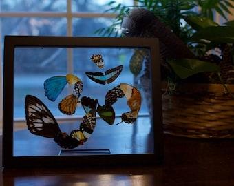 Butterfly Wing Om