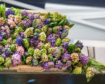 """Hyacinths in Columbia Road Flower Market, London - 8"""" x 12"""" Photography Print"""