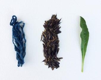 Woad seeds organic 100 + (Isatis tinctoria): natural indigo blue dye plant