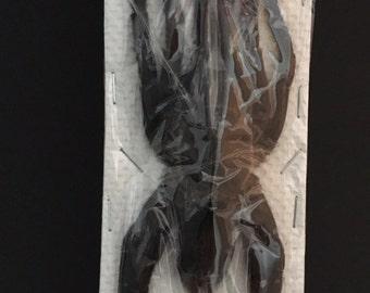 Insect Supplies | Dried Birdspider Haplopelma sp. Brown | Spider | Insect Art | Entomology