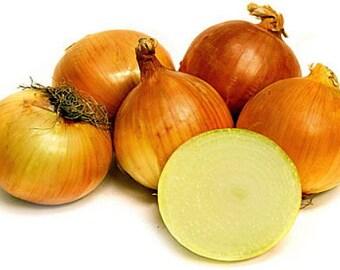 Yellow Onion Sets 75 Bulbs - Sweet Taste - 14/21 mm