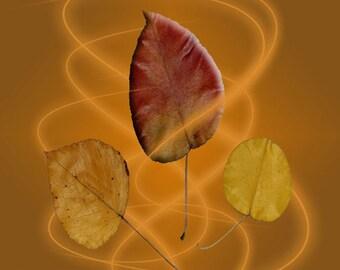 Fall Leaves Orange Swirl Trio Autumn Fine Art Photography