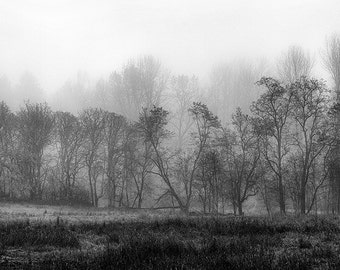Landscape Photography, Trees in Fog, Winter, Steilacoom Park, Fine Art Black and White Photography, Wall Art, Home Decor