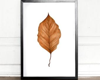 Beech leaf, autumn leaf, watercolor, giclee art print, botanical, Fagus, wall decor, home decor