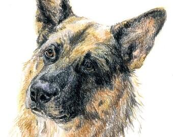 Portrait-croquis de votre chien (A4)  / Sketch-portrait of your dog (A4 size)