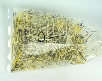 Unwashed North American Porcupine Quills: 1-oz. Bag