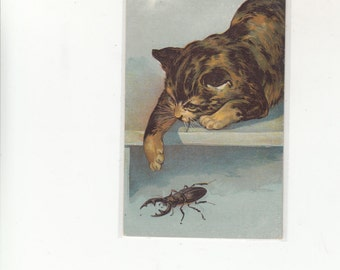 C1910 Antique Postcard Fine Old Cat Watching Beetle