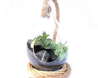 Large woodland teardrop terrarium with scilla pauciflora - false orchid
