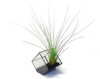 Stained Glass Terrarium - 10cm Cube - Cut-off Edge - Geometric Terrarium