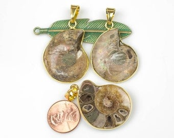 Fossilized Sliced Ammonite with Gold bezels- 30mm