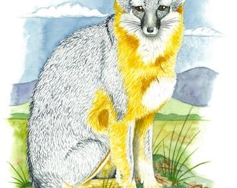 Original Watercolor Print, Grey Fox in the Laguna, Oak Leaves, Summer Wildlife