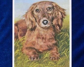 1960's Rudolf Sonnleitner Dachshund Dog Postcard Made by Weichman-Bildkarten, Germany Unused