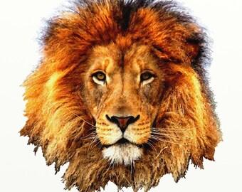 """Lion 40"""" x 40"""""""