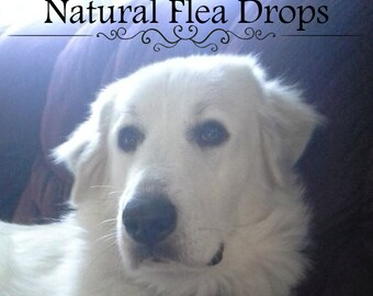 Flea Repellent Drops for Dogs, Puppies, Cats, and Kittens