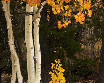 Autumn Five
