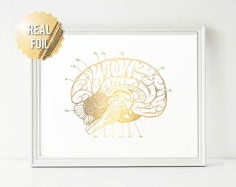 Brain Anatomy Print - Genuine Gold Foil - Brain Art - Medical Student Gift - Medical Art - Medical Office Decor - Doctor Gift - Nurse Gift