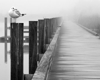 Photography meeting with a Seagull / puts a seagull Fine Art Photography / Printed Photography