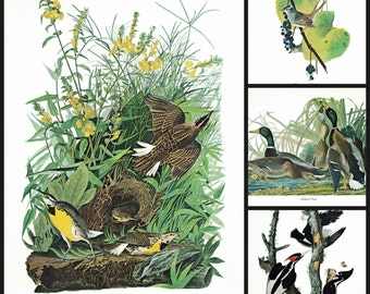 4 Vintage Audubon Bird Prints 1970s Art Prints of Sparrows Ducks Woodpecker Meadow Lark