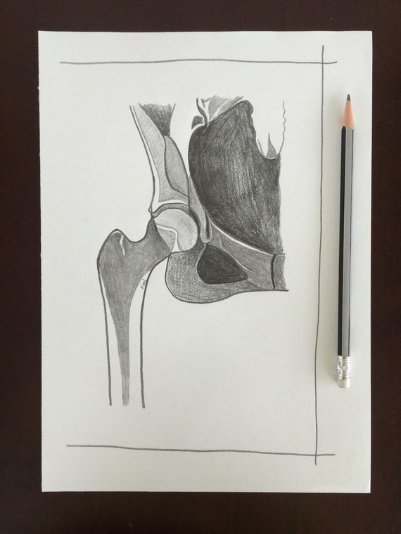 Original Radiology Wall Art Hip X Ray Anatomy By