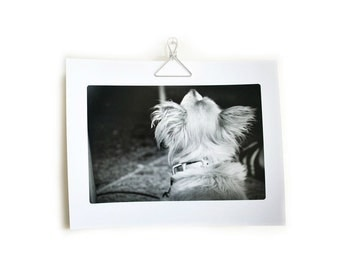 Pet photography vet veterinary office art dog black & white - 8.5 x 11