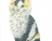 cat art print - study of a sweet furry calico kitten portrait - cat drawing, cat lover's gift, kids room nursery home decor