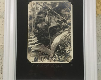 """Original 1910's Vintage Sepia Photo of """"PINK LADY'S SLIPPER 18"""" - 1 of 8 in Series I"""