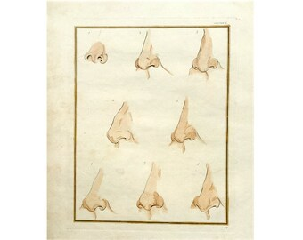 c. 1774 NOSE ANATOMY ENGRAVING - original antique print - antique hand colored human anatomy engraving - physiognomy rhinoplasty  no. 2