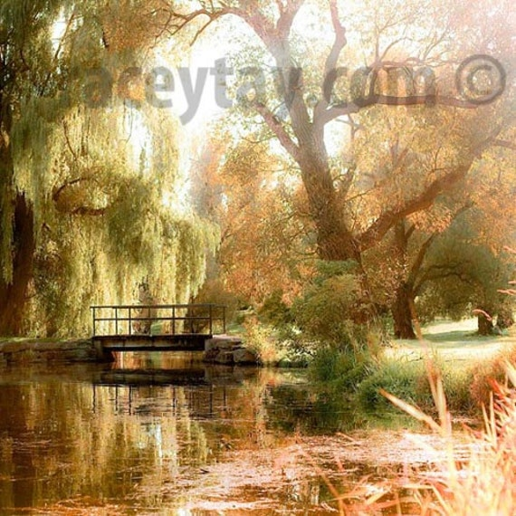 Summer Trees Print, Nature Photography, Large Wall Art, Green Gold Wall Art, Weeping Willow Trees Photos, 12x12 Ikea Ribba Size Prints