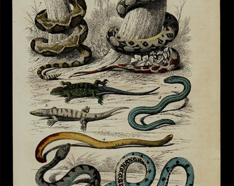 1850 Antique SNAKE print, reptile, serpents, lizarsd, hand colored engraving
