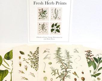 Botanical Herb Print Set. Kitchen Art Posters Set of 4. Vintage Fresh Herbs Plants flowers Vintage art prints gallery wall  CP288