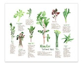 Botanical illustration, Vietnamese medicinal herbs, Watercolor herb painting, Kitchen print, Food art, Kitchen wall art, 8X10 kitchen poster